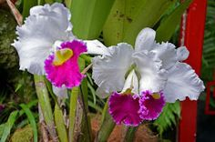 Biz :): Singapur Botanik Bahceleri Plants, Singapore, Botany, Plant, Planets