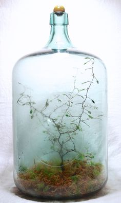 terrariums Terrarium ♥ I must have this one, a mysterical little tree in a misty bog. Types Of Heate