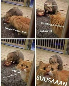 LOL! This made my night! Click the photo for more funny cat pictures