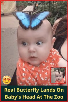 #Real #Butterfly #Lands #Baby #Head #Zoo Flower Aesthetic, Aesthetic Hair, Book Aesthetic, Business Casual Outfits, Cute Casual Outfits, Angel Wallpaper, Kitten Wallpaper, Acrylic Nails Coffin Pink, Home Entrance Decor