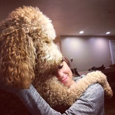 Doodle Fact #17: The Doodle Hug is unlike any hug you've ever experienced, like being hugged by a giant teddy bear.