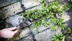 Fjern ukrudt mellem fliserne - effektivt husråd