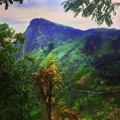 Exploring the impressive nature of Sri Lanka  #srilanka #nature #safari #green #reise #travel #traveling #reiseblog
