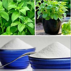 Stevia Rebaudiana Seeds Natural Sweetener Sugar by Herb Seeds, Stevia, Herbs, Leaves, Sugar, Natural, Etsy, Herb, Nature