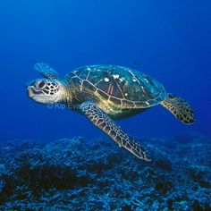 Sea Turtle by Kip Evans