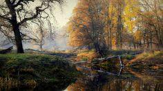 złota polska jesień w Rogalinie