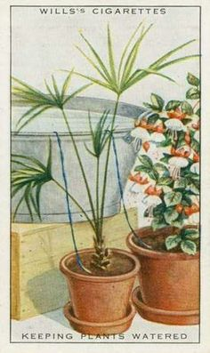 100-year-old cigarette-pack tip tells us how to water your plants automatically!