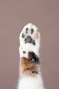 A furry little paw.
