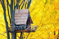 DIY Tree House Ideas & How To Build A Treehouse (For Your Inspiration)