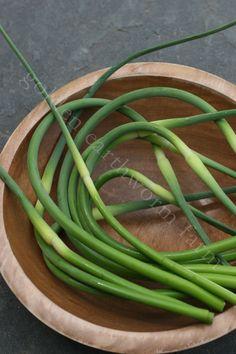 Garlic Scapes | Golden Earthworm Organic Farm