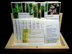 #Wildkräuter für Green Smoothies (Saatgut-Box) - Eine Saatgutbox, zehn Samentütchen und zehn Pflanzensteckbriefe. Die Box ist aus Lindenholz gearbeitet, unbehandelt, 20,7 x 8 x 3,8 cm. Auf den Tütchen befinden sich ausführliche Aussaathinweise, auf den Steckbriefen (Hochglanzkarton, Digitaldruck) außerdem ein Foto der Pflanze und die Verwendungshinweise.