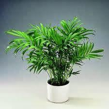 Τα φυτά που καθαρίζουν τον αέρα σπιτιού - Η ΔΙΑΔΡΟΜΗ ®