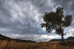 Eenzame boom - Lonely tree #photography #tree