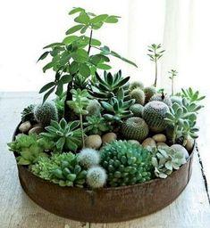 The Best 45+ Creative DIY Cactus Planters You Should Copy Right Now https://decoor.net/45-creative-diy-cactus-planters-you-should-copy-right-now-397/