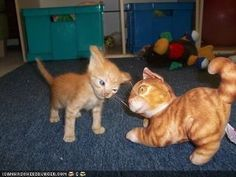 I once had a kitten that reacted like this to a toy.  lol
