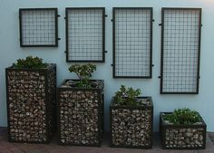 Gabion planters with wall-mounted trellises? awesome