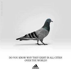 10 Ads Adidas Ideas Advertising Ads Creative Advertising