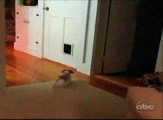 This dog who didn't expect to see a cat behind the door. | 28 Dogs Having A Way Worse Day Than You