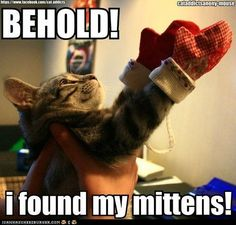 funny pictures - Kitten Mittens!