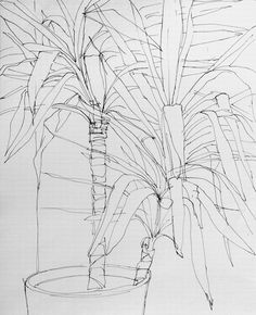 Pen on paper observation of a plant in the oe:gen office