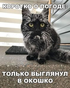 """Cats Who Truly Hate This White Cold Thing You Call """"Snow"""" - World's largest collection of cat memes and other animals Cute Black Cats, Cute Cats, Funny Cats, Animals And Pets, Funny Animals, Cute Animals, Black Cat Meaning, Tierischer Humor, Polydactyl Cat"""