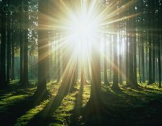 Sunbeams through forest trees, spring