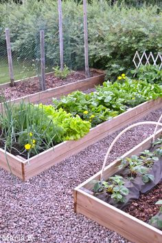 Laatikkotarhan lumoissa | Kanelia ja kardemummaa Rose Garden Design, Vegetable Garden Design, Tropical Landscaping, Backyard Landscaping, Home Grown Vegetables, Garden Deco, Dream Garden, Garden Inspiration, Outdoor Gardens