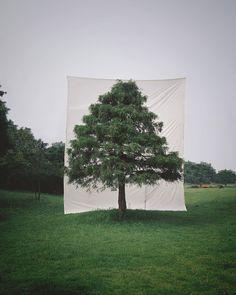 Trees Abroad, Myoung Ho Lee