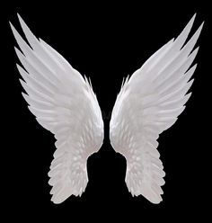 White angel wing. Isolated on black , #Affiliate, #angel, #White, #wing, #black, #Isolated #ad