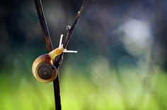 Fine Art Macro Photograph of a Garden Snail Tiny by #InLightImagery #fpoe #photography