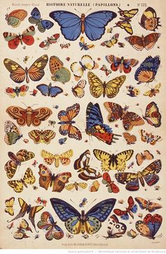Illustration scientifique - Scientific Illustration plus beaux papillons. Collage Des Photos, Art Du Collage, Photo Wall Collage, Inspiration Art, Art Inspo, Art Papillon, Plakat Design, Butterfly Art, Butterflies