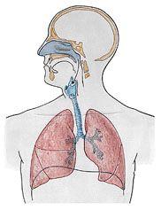 Aula de Anatomia | Sistema Respiratório