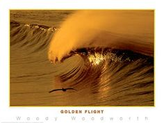 "Surfing ""Golden Flight"" by Woody Woodworth Poster Print - Creation Captured Surfing Photos, Ocean Sunset, Surfs Up, Stunningly Beautiful, Color Stories, Pacific Ocean, Poster Prints, Posters, Nature Photography"