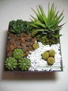 Saiba como montar um mini jardim de cactos e #suculentas - Jardim das Ideias STIHL