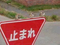 面白画像 止まれ! 道路標識の「止まれ」で止まるのは、なにも車だけではありません(笑)adsign_0028