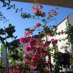 Trükk, amivel kékre színezheted a hortenziát   Balkonada Plants, Flora, Plant, Planting