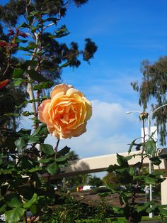 1000 Images About Balboa Park A Landscape Of Art And
