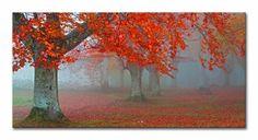 Cuadro Bosque con árbol rojo. Foto realizada por Juan Antonio Palacios