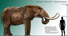 Giant: How the 10ft tall mastodon may have looked next to a comparatively tall 6ft man