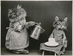 Le petit déjeuner : chat en robe servant le café à un chaton Frees Harry Whittier (1879-1953), photographe