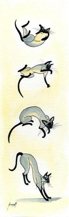 PRINT ART ORIENTAL SIAMESE PAINTING 6632 DIANNE HEAP EXOTIC CATS FELINE KITTEN