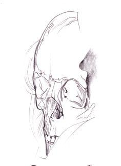 squll. sketches. pencil. maja barańska