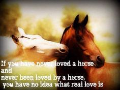 You can never know what real love is without horses
