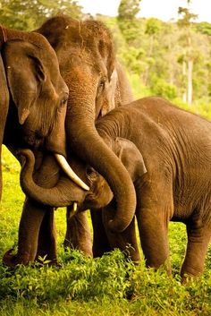loving their baby elephants