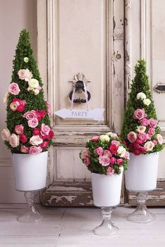 roses in boxwood ...love this idea!