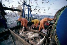 Pictură pescar