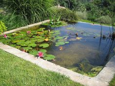 Would love to have a pond like this!