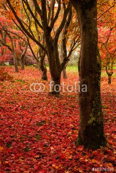 Comp image Eps Vector, Vector Art, Hd Video, Royalty Free Stock Photos, Autumn, Illustration, Image, Fall, Hd Movies