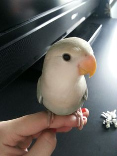 One of Shinobi's first pics. Almost a year ago!  Love bird?