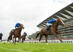 Kitten Joys's Hawkbill. It's race perfectly crafted by a trio of runners for a Godolphin operation that is meeting lofty expectations at this year's Royal meeting, it was Hawkbill (Kitten's Joy) who emerged firmly on top to …  6/16/16
